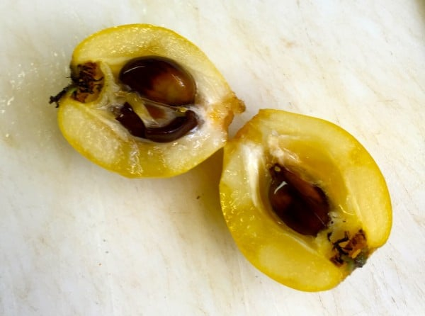 A loquat cut in half showing the seeds.
