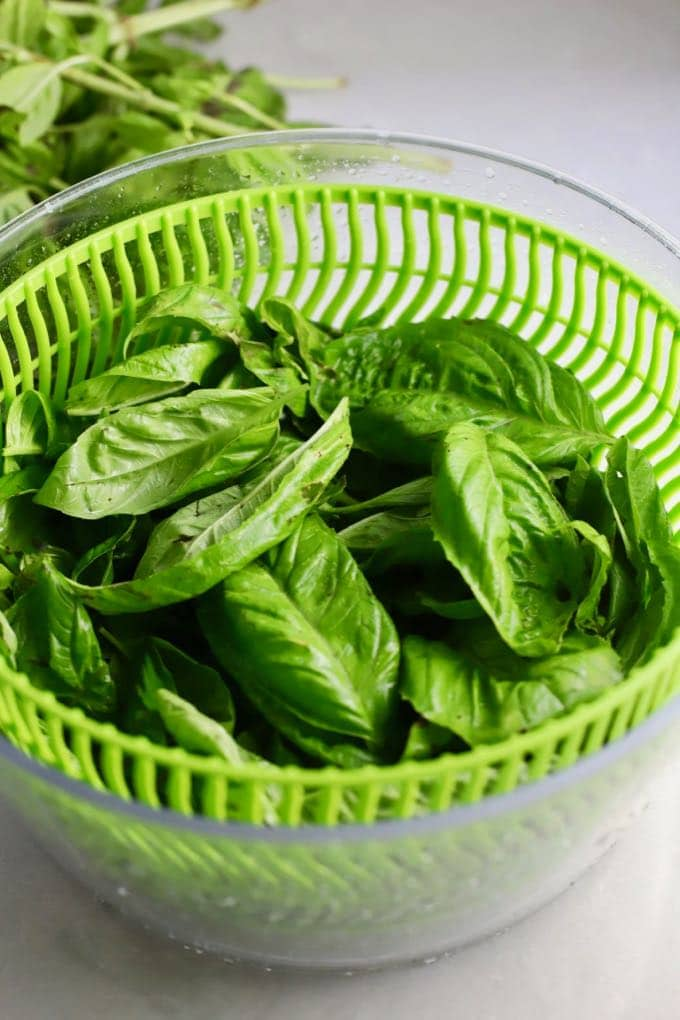 A salad spinner full of fresh basil for Easy Homemade Southern Basil Pesto